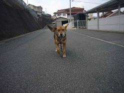 散歩20130130-3