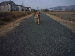散歩20130130-4