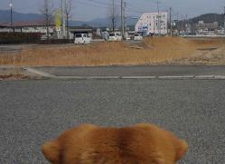 散歩20130130-5