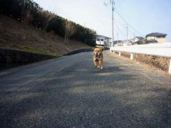 散歩20130131-1