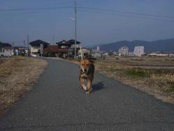 散歩20130131-2