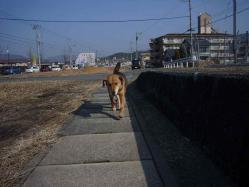 散歩20130131-5