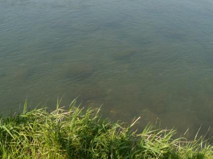 20120516_団地裏水澄む_DSCN1565