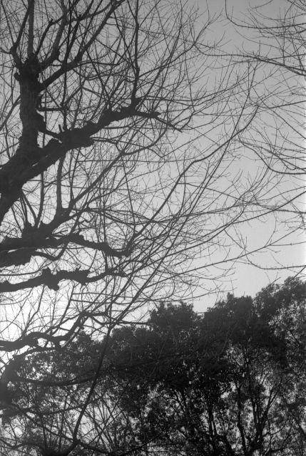 冬景色2014-03a