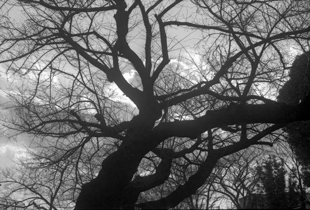 冬景色2014-03b