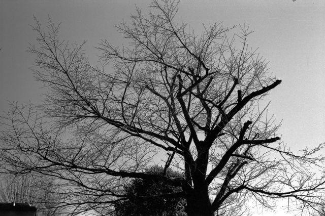 冬景色2014-06b