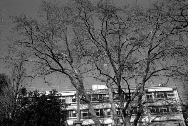 冬景色2014-06d