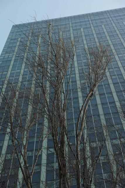 冬景色2014-04a