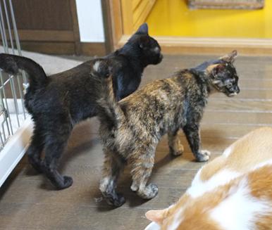 仲間の仔猫や猫の部屋の成猫とも仲よしです