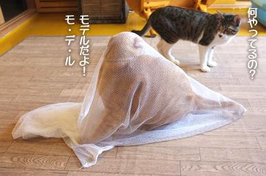 Well Cat Homeで一番大きいチャトルくん(6.2kg)も余裕でこのとおり