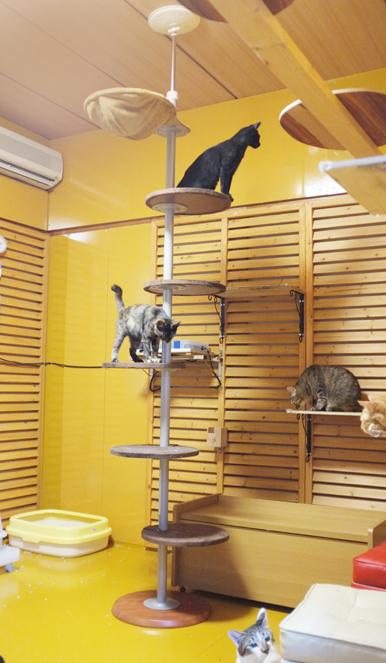 F様からのプレゼントの猫大好きキャットタワー