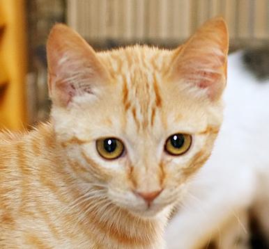 目の大きい美人猫さん