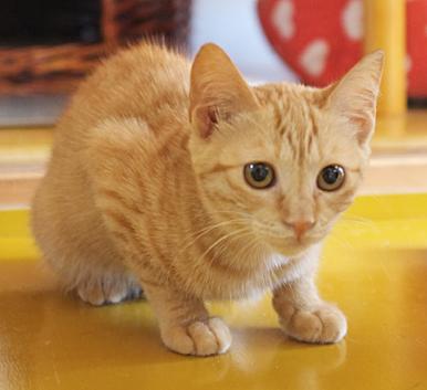 猫の家デビュー!まだちょっと緊張気味です。