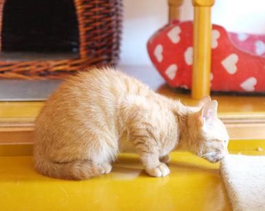 猫の家ではまずは臭いをかいで探検から