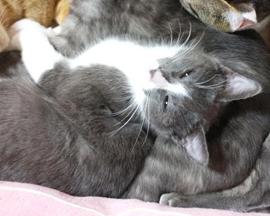 お友達とも仲良くできるので、先住猫さんがいても大丈夫