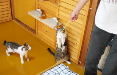 Y様の息子さんに遊んでもらってハイテンションの猫達