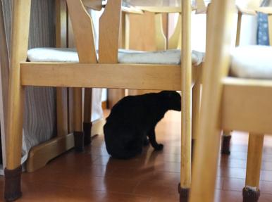 テーブルの下に隠れられました