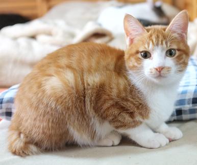 6ヶ月になったクルミちゃん 美人猫さんに変身