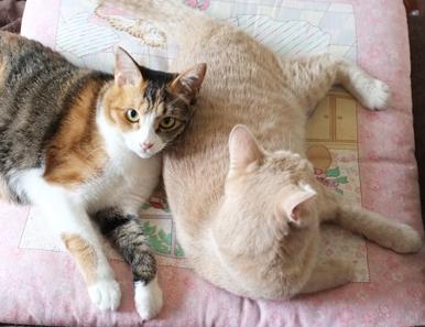 ルーシーちゃんと愛ちゃんはいつも一緒の仲良し