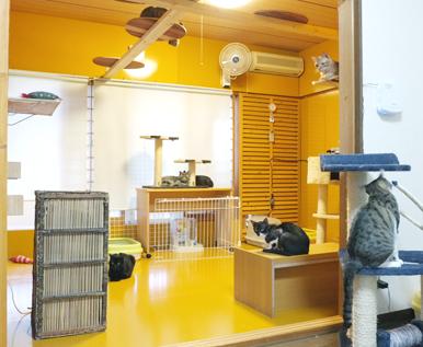 メインの猫部屋