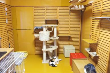 メインの猫部屋を横から見たところ