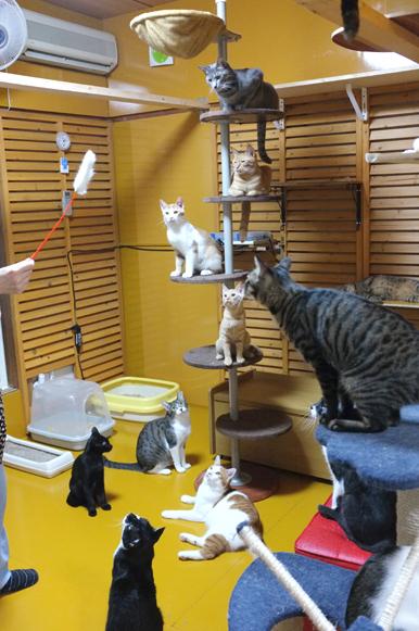 猫じゃらしを見つけて集まってきました。