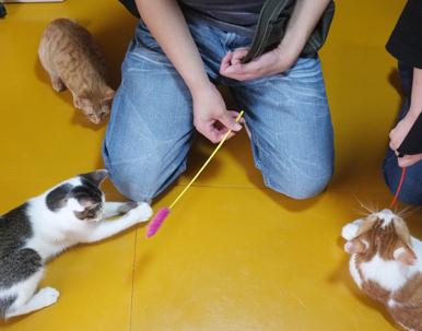 U夫妻に遊んでもらい大喜びの猫達