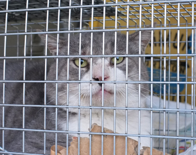 縄張りを荒らしに来る外ボス猫も去勢できました!貫禄あります