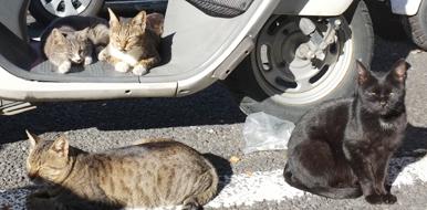レストラン駐車場の成猫達