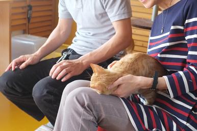 東京世田谷のKご夫妻が猫の家に来てくださいました。