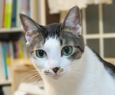 ボクスタッフ猫だから代表でお詫びをするね!