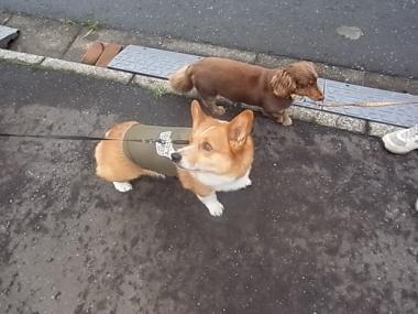 クーちゃんとお散歩