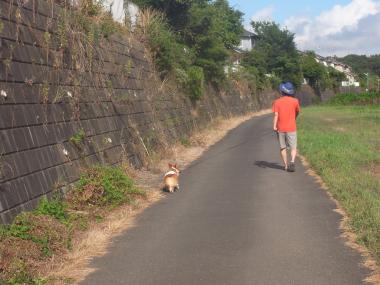 休日散歩8