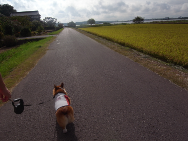 休日散歩3