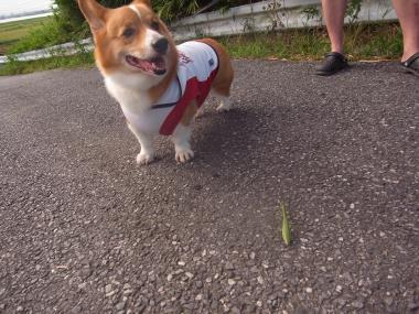 散歩カマキリ2