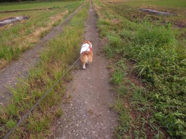 散歩農道1