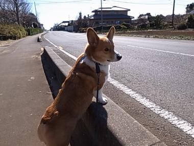 今日の散歩4