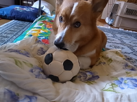サッカーボール3