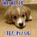 P1000101.jpg