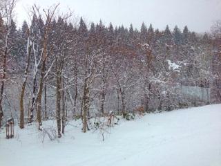 ロータス雪景色加工後