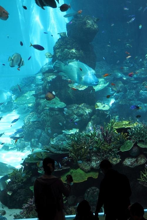 名古屋港水族館09