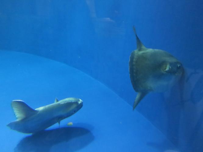 名古屋港水族館08