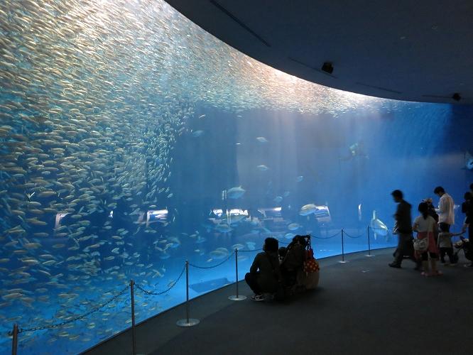 名古屋港水族館06