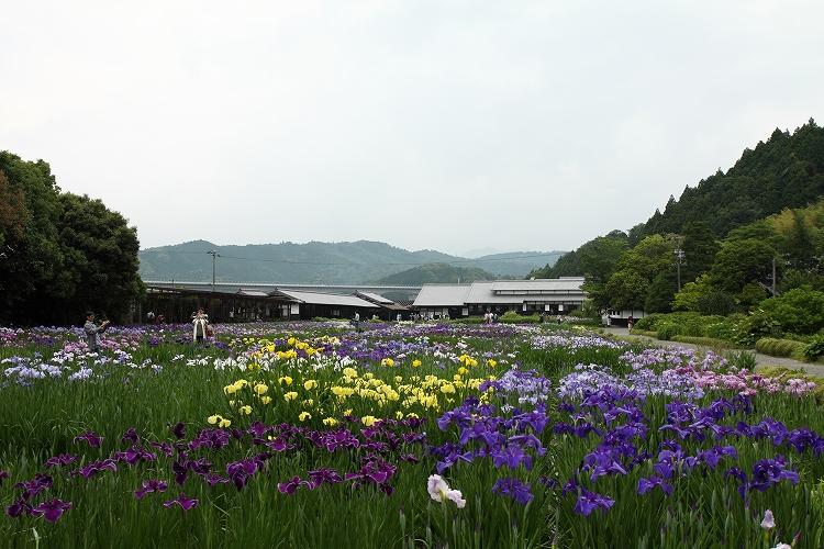 加茂花菖蒲園08