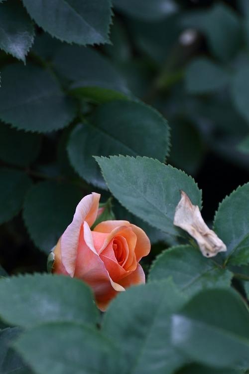 花フェスタ-57