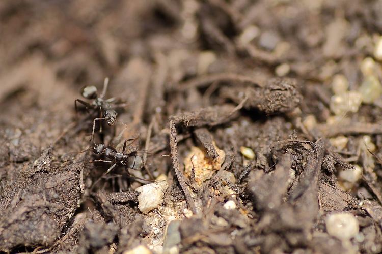 蟻マクロ08