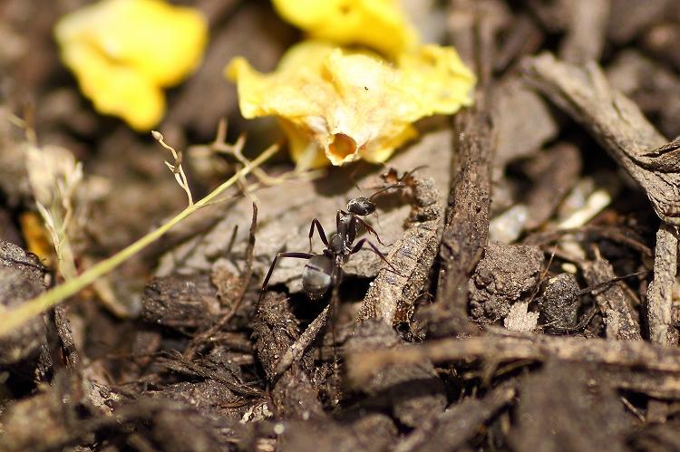 蟻マクロ07