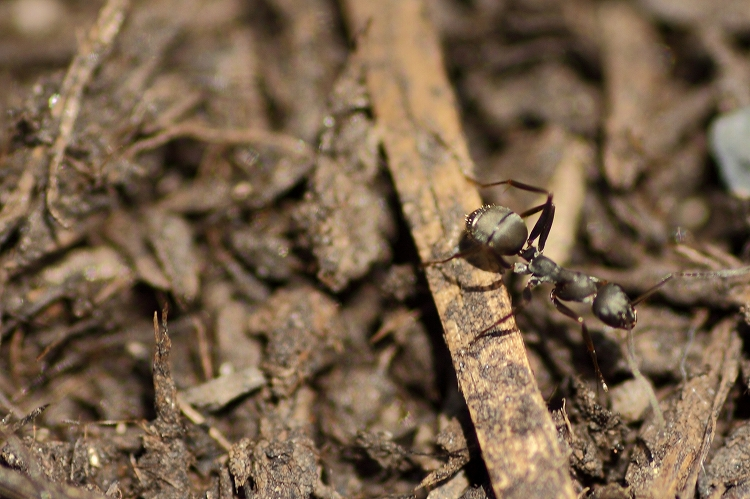 蟻マクロ03