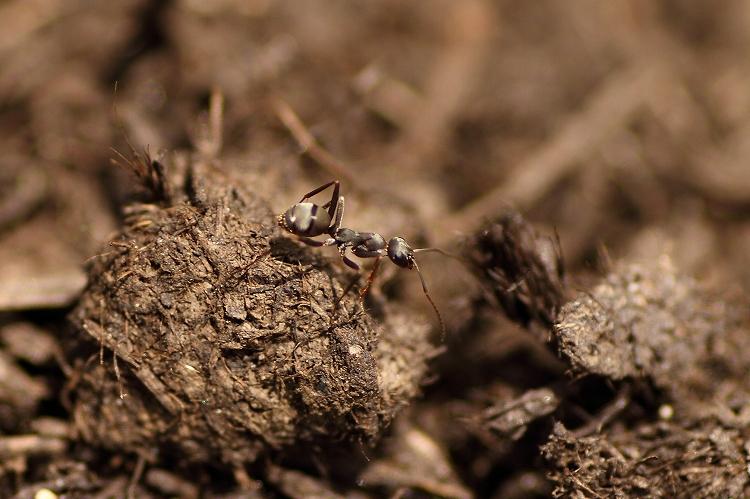 蟻マクロ06
