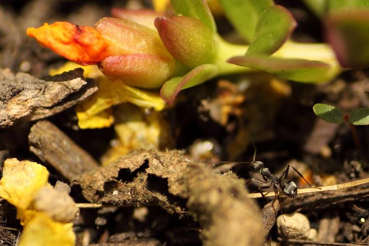 蟻マクロ04